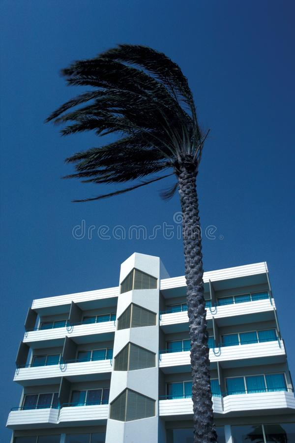 A palm tree in front of a white and blue abstract architectural building under a blue sky. A vertical low angle shot of a palm tree in front of a white and blue stock photography