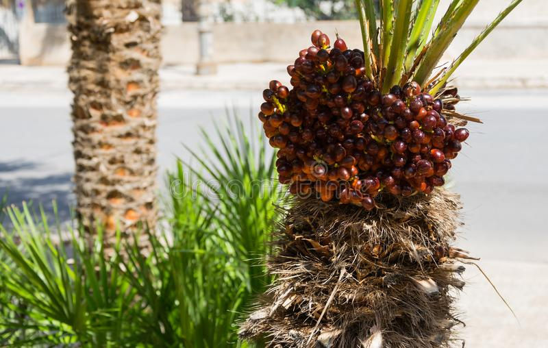 This is a little palm tree plant stock image