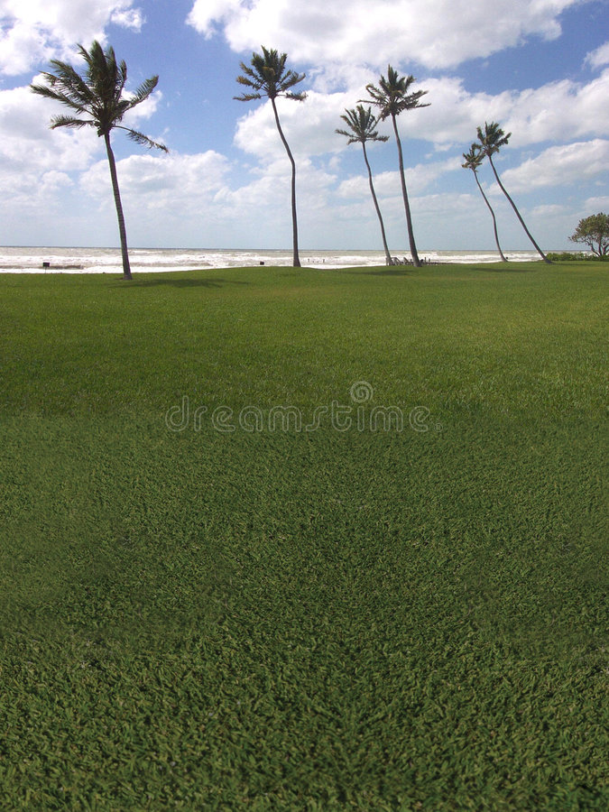 Palm tree golf course the beach royalty free stock photography