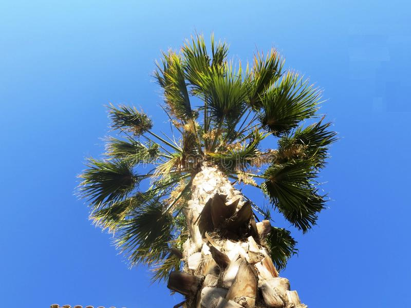 Palm tree. Green blue sky Asia camping Hiking abstraction stay calm bottom view stock photos