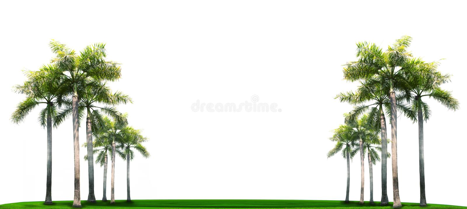 Palm tree on green grass field with white space