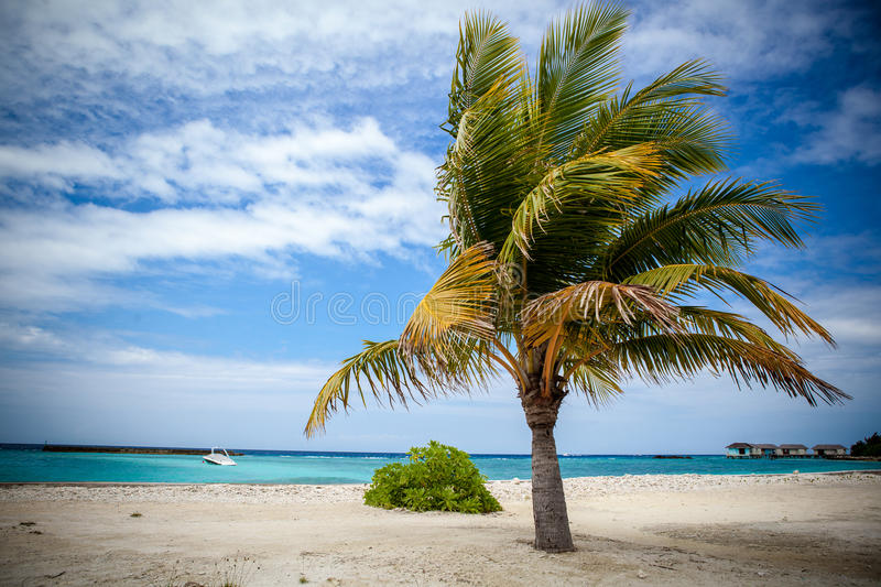 Download Palm Tree In Harbor Royalty Free Stock Photo - Image: 28883765