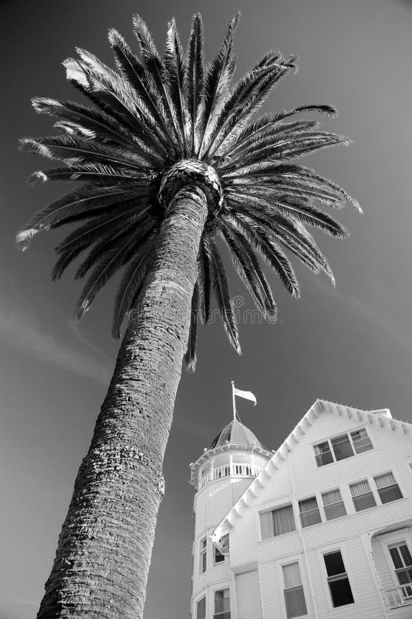Palm Tree At Hotel Del Coronado Stock Photo
