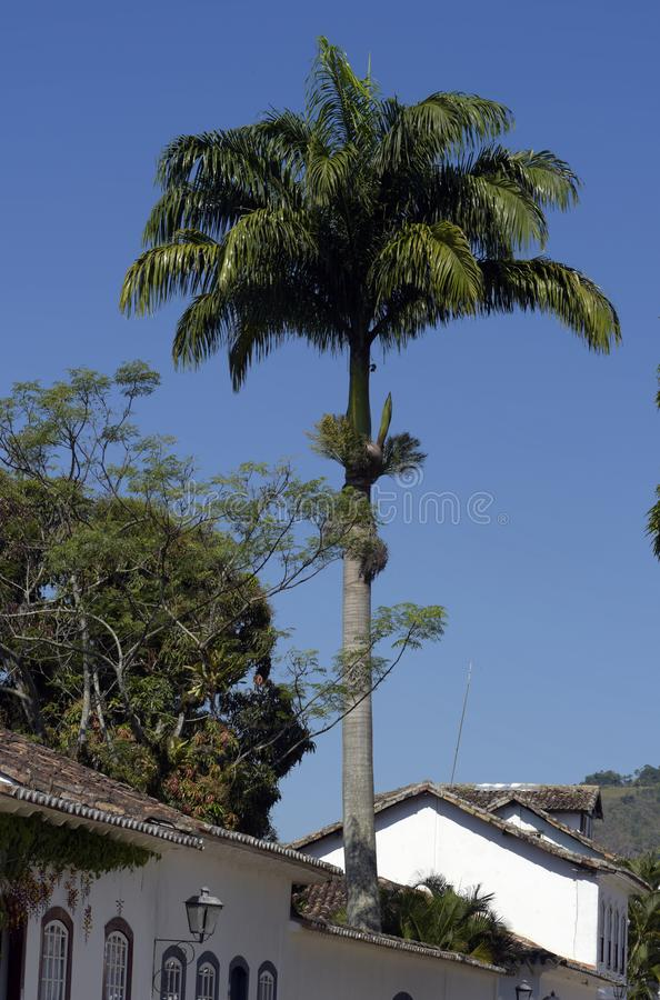 Palm tree in house garden of old colonial city stock photos