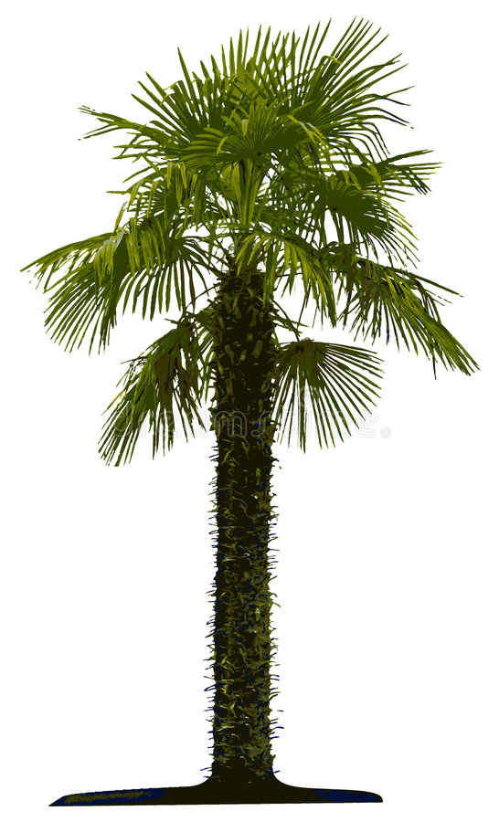 Palm tree isolated vector illustration
