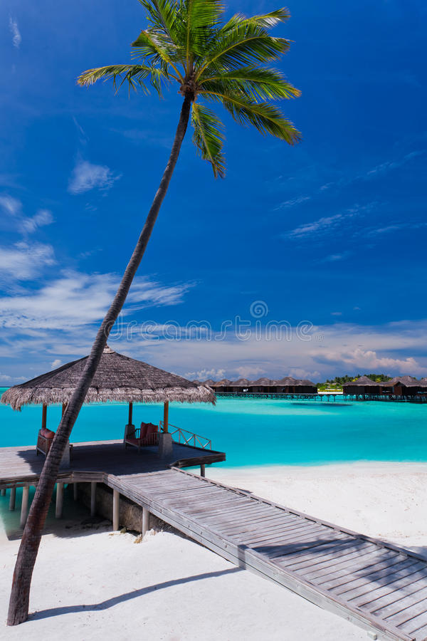 Download Palm Tree And A Jetty On A Tropical Lagoon Stock Photo - Image of palm, paradise: 23396742