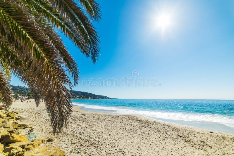 Palm tree in Laguna Beach. California stock photography