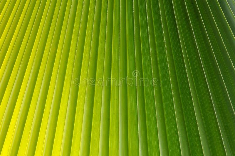 Download Palm Tree Leaf stock image. Image of maldives, flora - 11648091