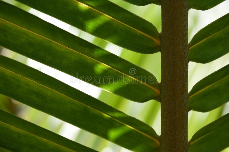 Download Palm tree leaf stock image. Image of ecology, horticulture - 1969945