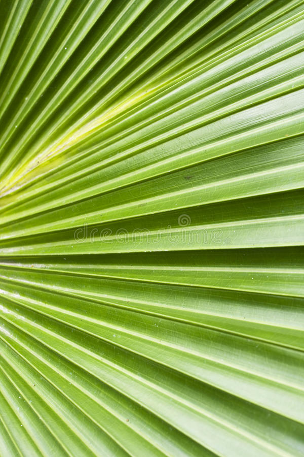 Download Palm Tree Leaf Abstract Background Stock Image - Image of water, texture: 14332493