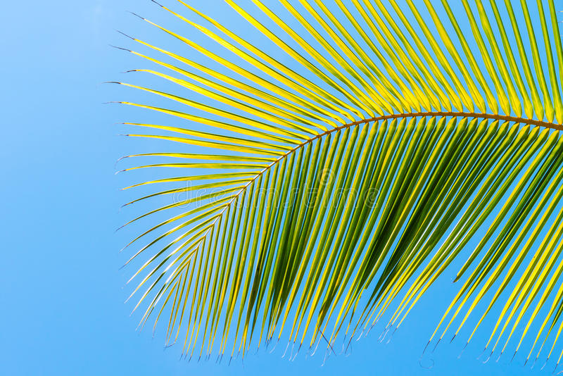 Download Palm Tree Leaf On Blue Clean Sky Background Stock Image - Image of paradise, blue: 85267187