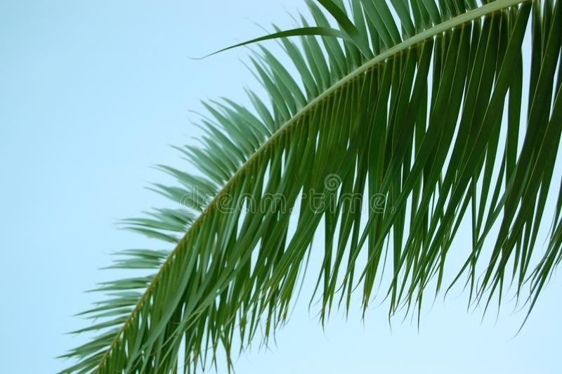 Download Palm Tree Leaf And Blue Sky Stock Photo - Image: 6088332
