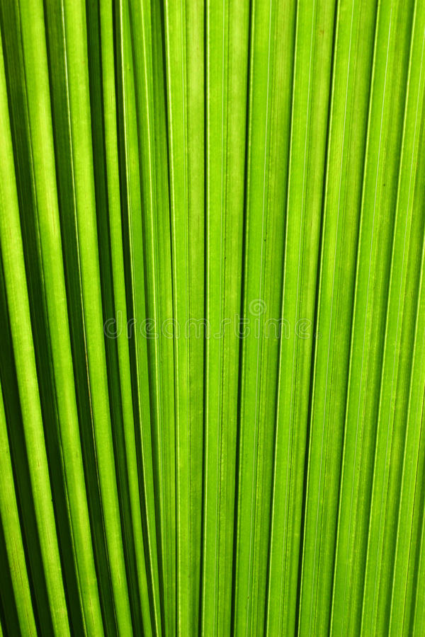 Palm tree leaf close up stock photography