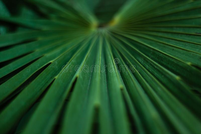 Palm tree leaf macro stock image