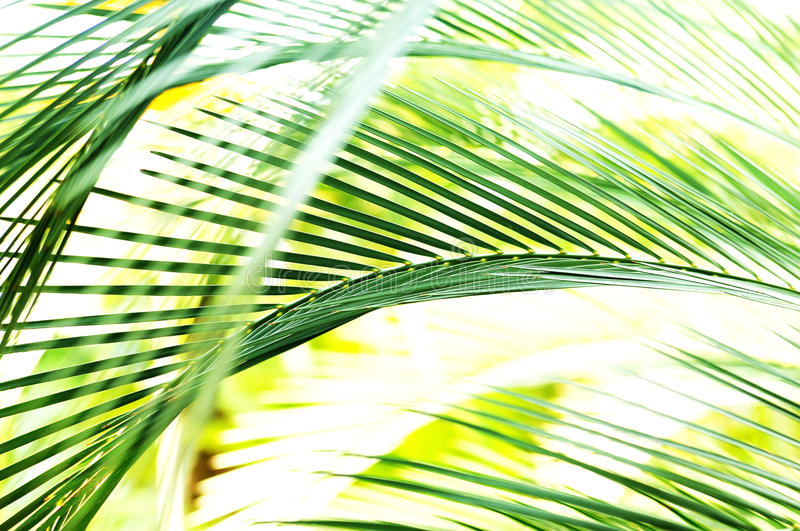 Download Palm Tree Leaf Motion Blur stock photo. Image of coconuts - 11656526