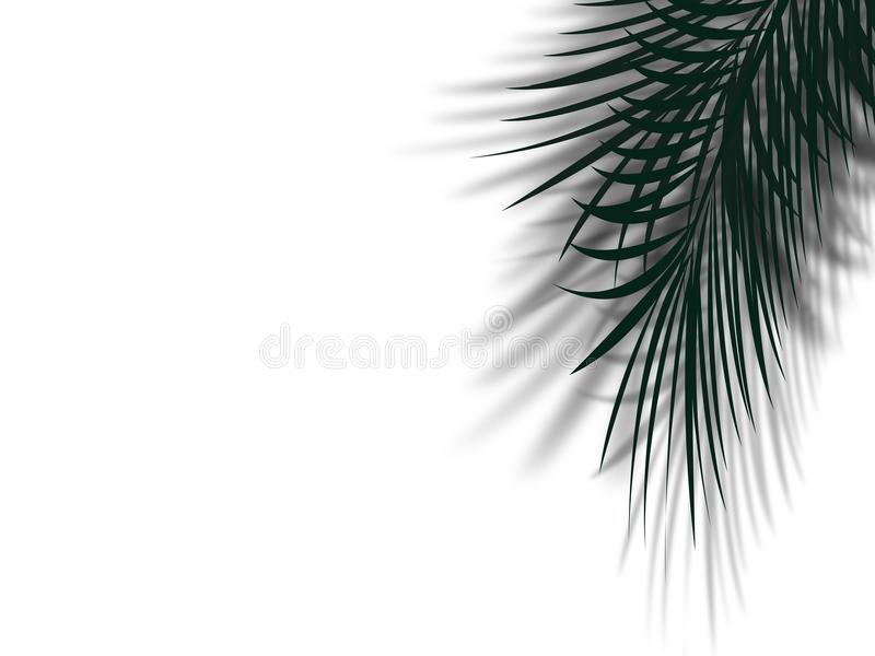Palm tree leaf with shadow reflect on clean white wall with copy stock illustration