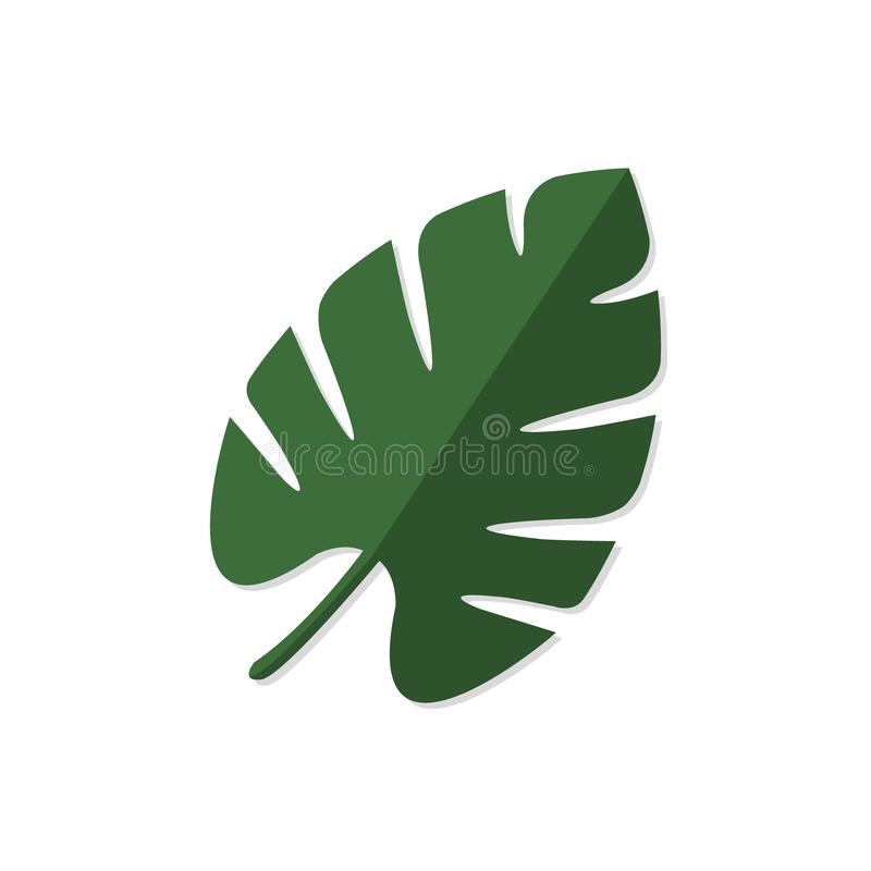 Palm tree leave, Monstera tropical plant on white background vector illustration.  vector illustration