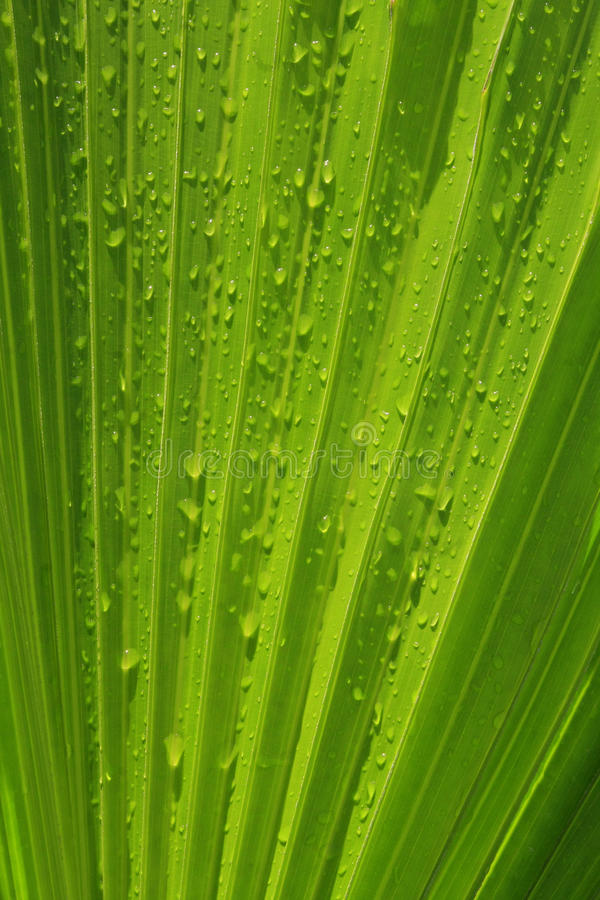 Download Palm tree leaves stock photo. Image of tropical, texture - 13592272