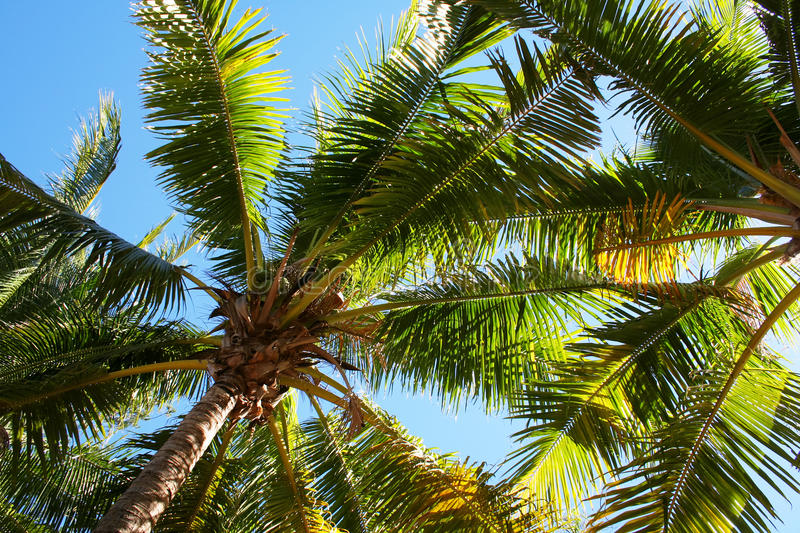Download Palm tree leaves stock photo. Image of environment, sunny - 18819320