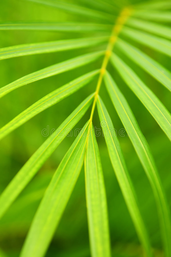 Free Palm Tree Leaves Royalty Free Stock Photo - 5035755