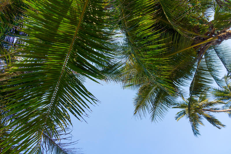 Download Palm tree leaves stock image. Image of summer, branch - 40583285
