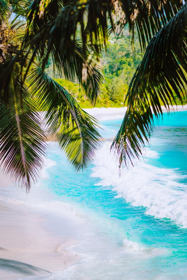Palm tree leaves on beautiful tropical paradise Anse intendance beach. Ocean wave roll on sandy beach with coconut palm royalty free stock photos