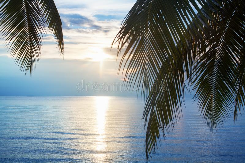 Palm tree leaves silhouette, sunset on blue sea background, tropical sunrise seascape, bright yellow sun glow reflection on water stock photo