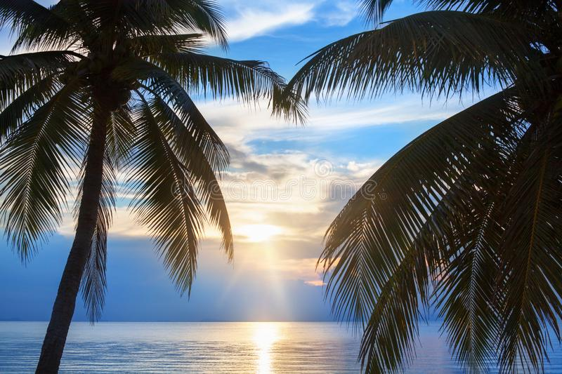 Palm tree leaves silhouette, sunset on blue sea background, tropical sunrise seascape, bright yellow sun glow reflection on water stock photos