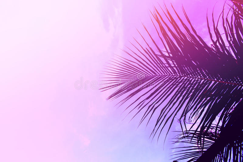 Palm tree leaves on sky background. Palm leaf over pink sky. Pink and violet toned photo. stock image