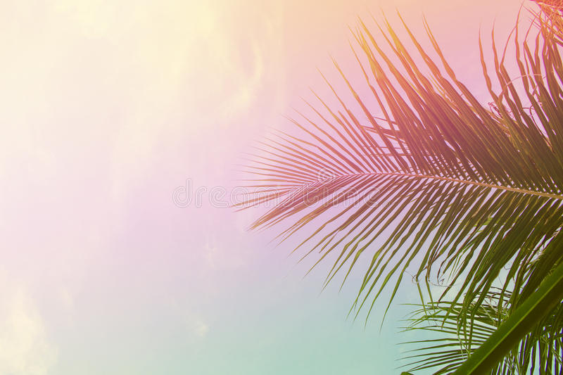 Palm tree leaves on sky background. Palm leaf over sky. Pink and yellow toned photo. stock photo