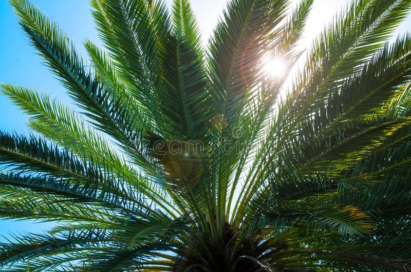 Palm tree leaves. Palm trees against blue sky. royalty free stock images