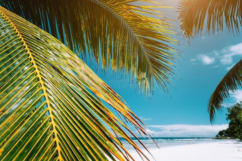 Palm tree leaves on tropical paradise beach Anse Cocos, La Digue, Seychelles royalty free stock photography