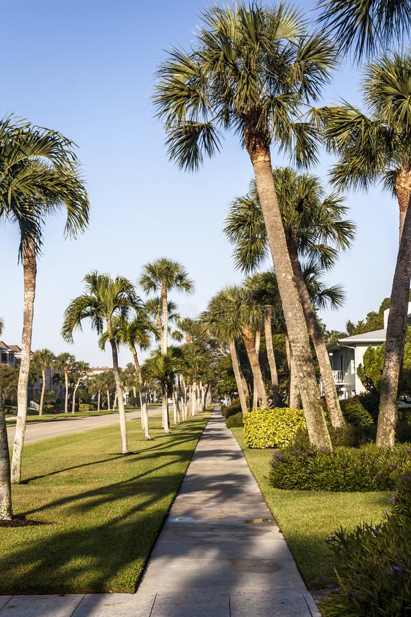 Palm Tree Lined Street in Florida stock photo