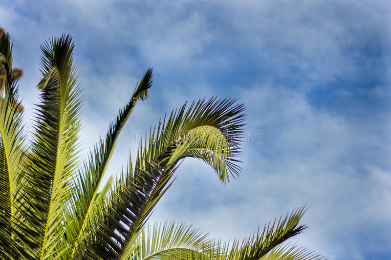 Download Palm tree stock image. Image of green, palm, background - 91998739
