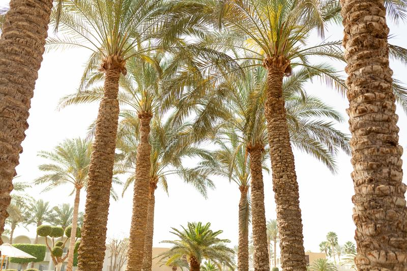 Palm tree low angle view tropical background stock photo