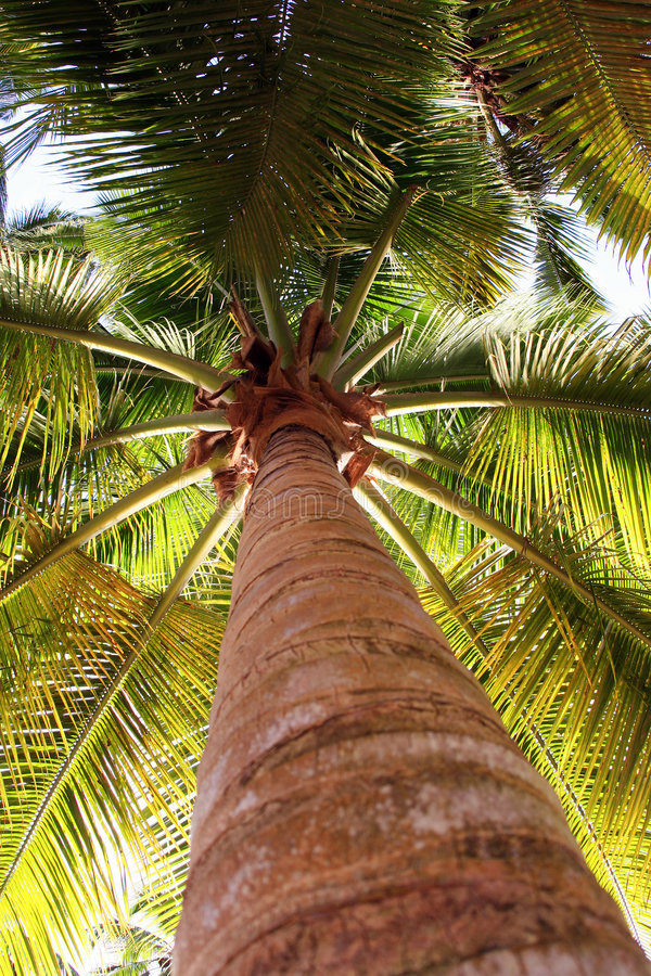 Download Palm tree from low view stock photo. Image of west, tropical - 2245376