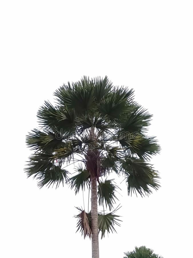Palm tree in the middle of a city park stock images