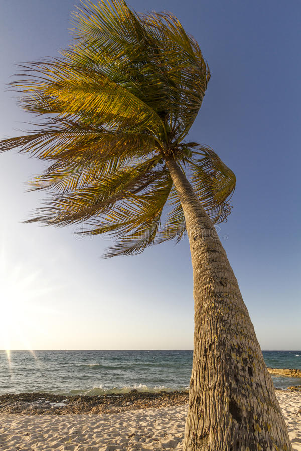 Download Palm Tree Moving In The Wind Stock Image - Image: 28915823