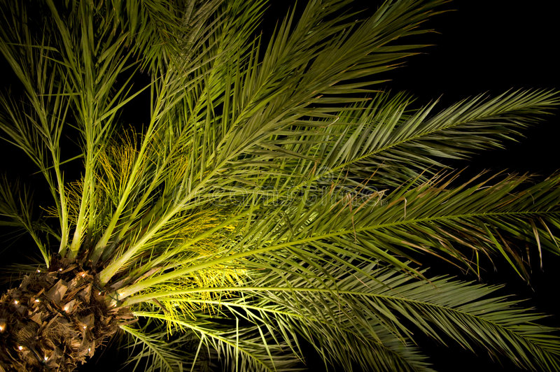Download Palm tree at night stock photo. Image of branch, natural - 5105128