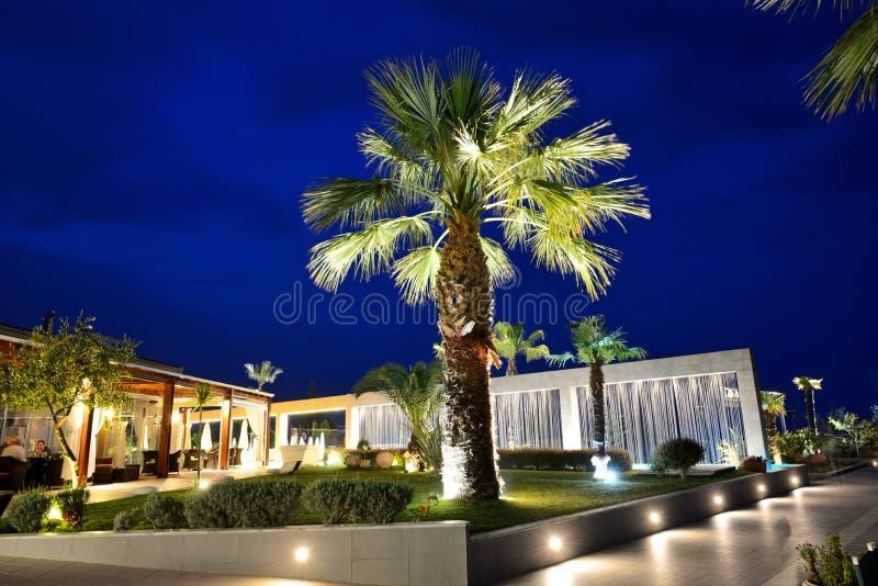 Palm tree in night illumination at the luxury hotel. Halkidiki, Greece stock photo