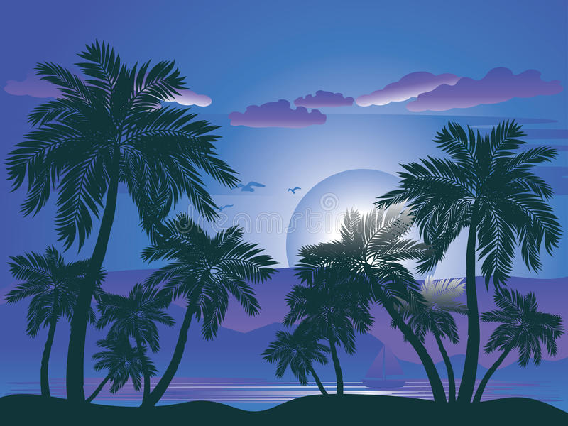Palm Tree at Night stock illustration
