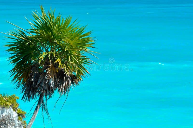 Palm Tree With Ocean Stock Photos