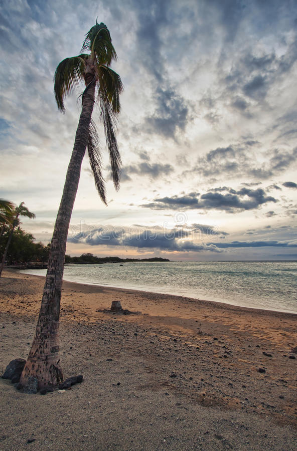 Download Palm tree and the ocean stock image. Image of blue, nature - 24532441