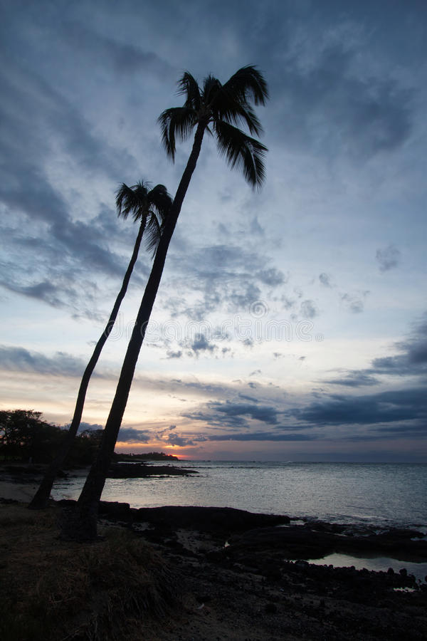 Download Palm tree and the ocean stock image. Image of plant, palm - 24532497