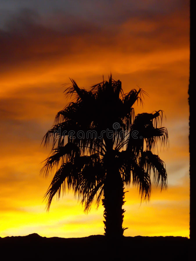 Free Palm Tree On Desert Sunset Stock Images - 31213244