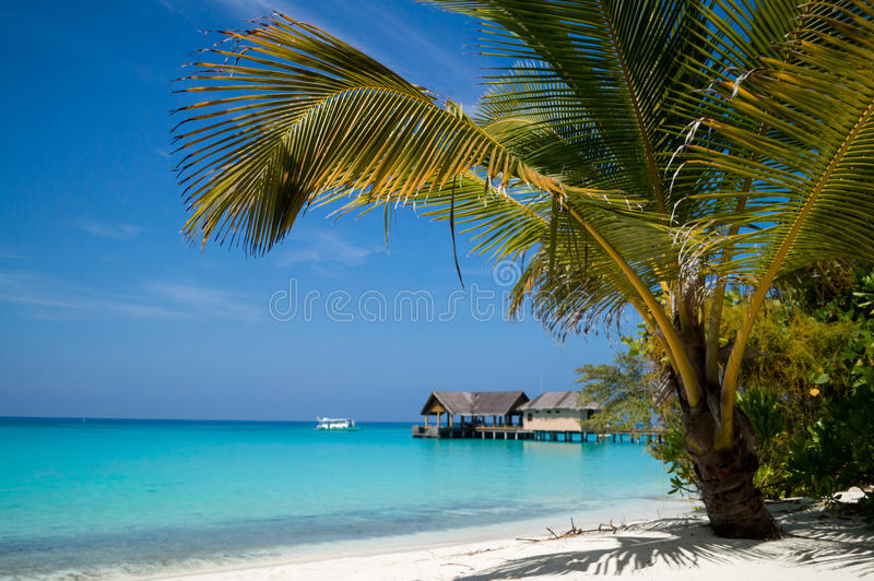 Download Palm Tree Over The Beach Overlooking Tropical Lago Royalty Free Stock Image - Image: 32237196