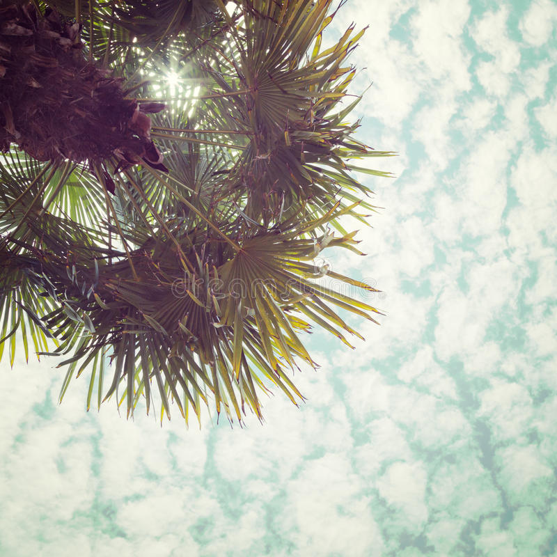 Palm Tree over Beautiful Clouds and Sun royalty free stock photos