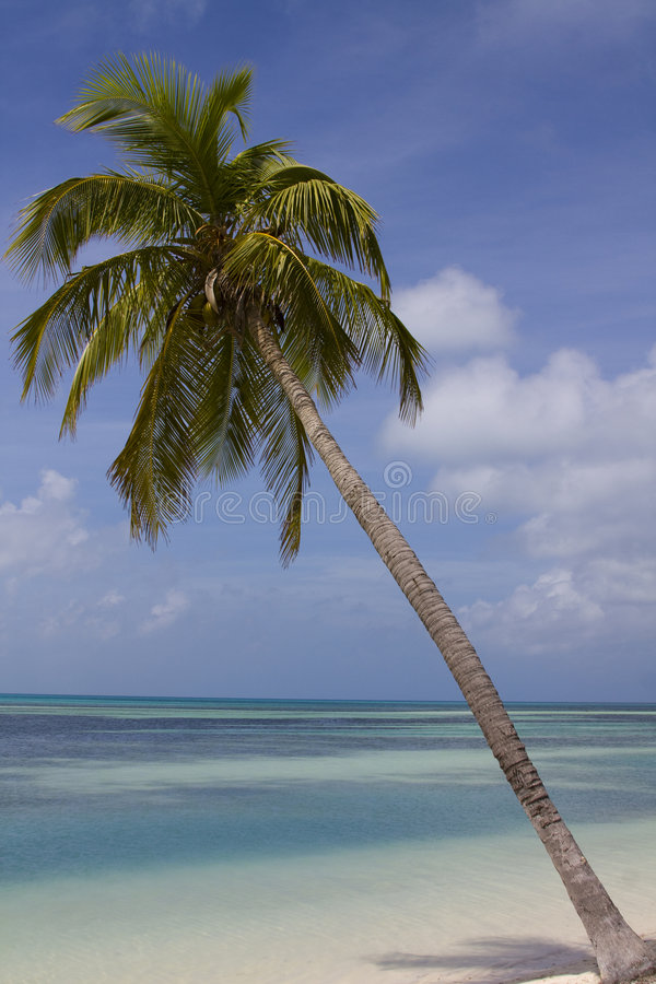 Download Palm Tree Over Blue Water stock photo. Image of blue, island - 8231564