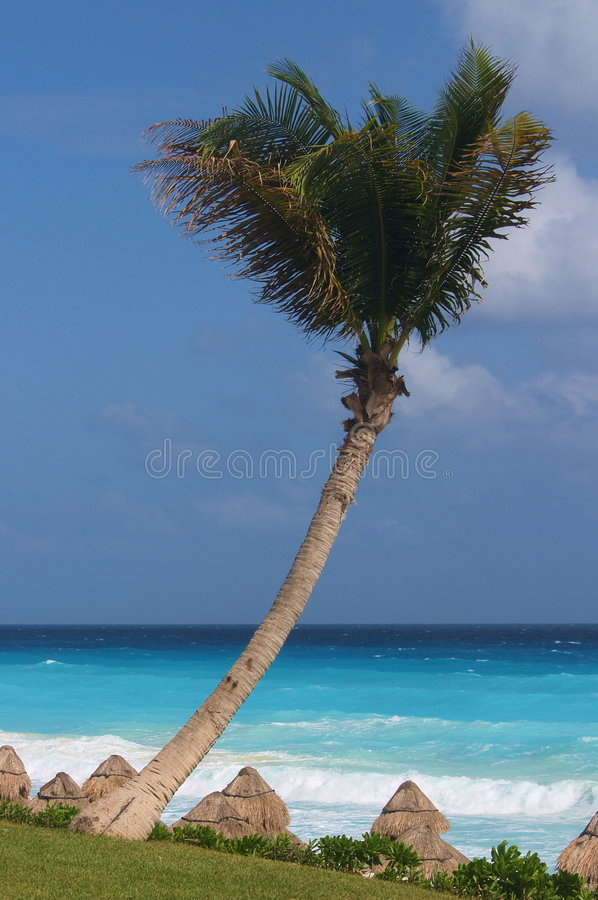 Free Palm Tree Over Carribean Beach Royalty Free Stock Image - 1855396