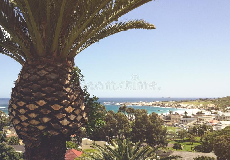 Palm tree over coastline stock image